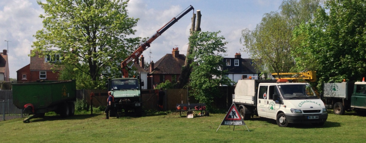 Tree Surgeon Guildford Surrey