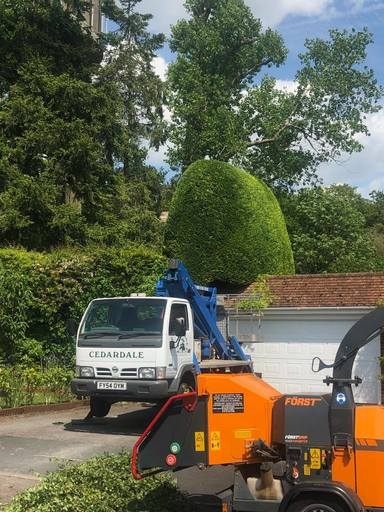 Hedge trimming using our cherry picker